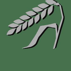 Allergene Glutenhaltiges Getreide